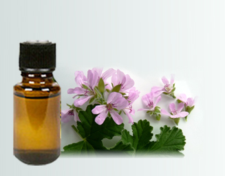 Rose geranium essential oil